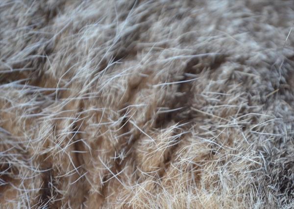 猫の毛イメージ