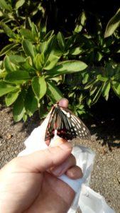 手に蝶がとまる
