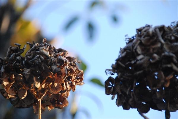 枯れた花イメージ
