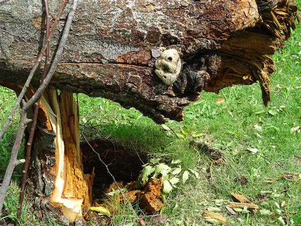 台風が去ったあと、倒木