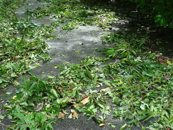 台風が去ったあと、青い落ち葉